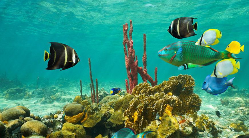 Einführung in die Unterwasserfotografie