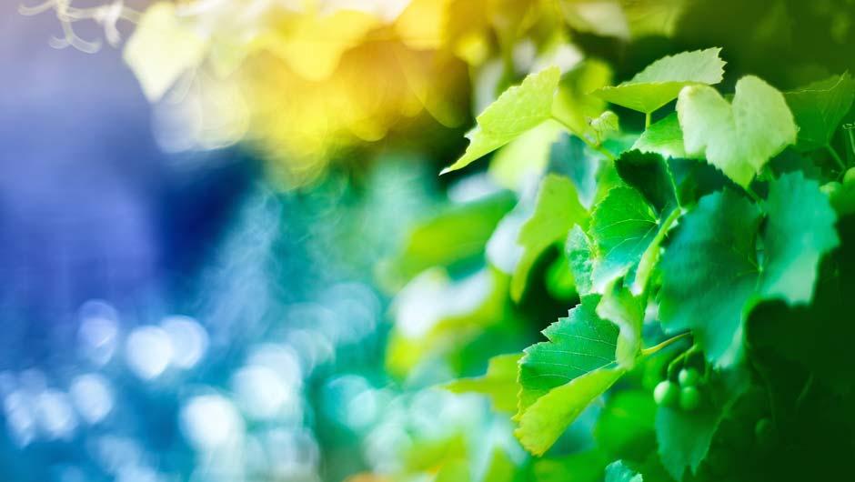 Pflanze mit unscharfem Hintergrund